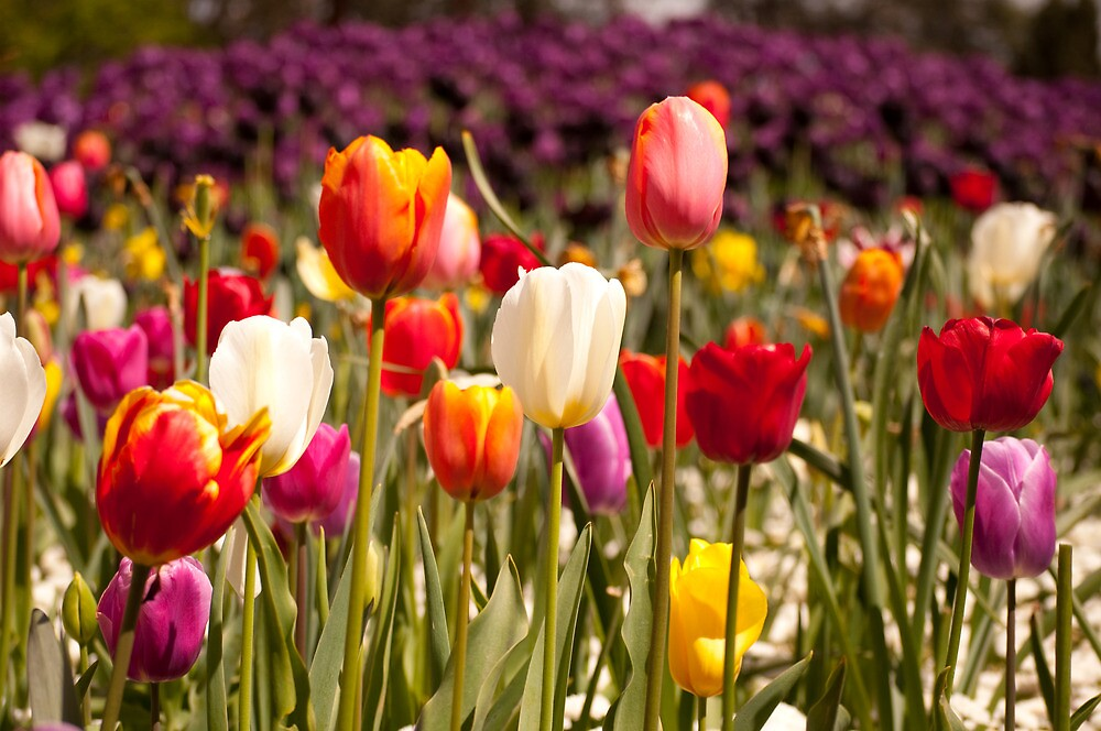 Pictures Of Spring Flowers In Bloom My Web Value