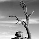The Sentinal....Victoria ,Australia by graeme edwards