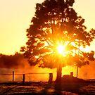 Fiery Sunrise...Kangaroo Island,South Australia by graeme edwards