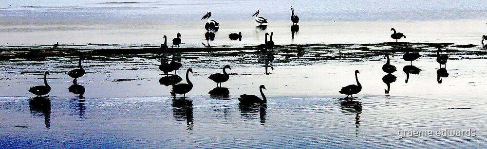 Swan Lake....Western Victoria by graeme edwards
