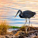 Wheeler Oregon - Great Blue Heron by IMAGETAKERS