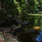 Sunshine Coast Hinterland - Queensland - Australia by Kylie Van Ingen