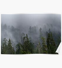 Misty Forest Poster