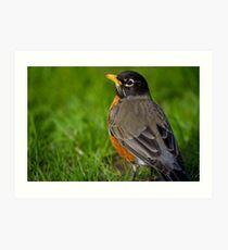 Robin in the Grass Art Print