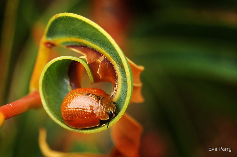 Leaf Beetle - Tortoise beetle by Eve Parry