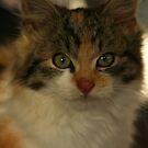 Kitten by Sean Farragher