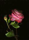Amy's Rose by Barbara Wyeth