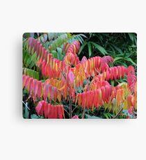 Staghorn Sumac Autumn Colors Canvas Print