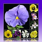 Spring Flowers Collage in Blue and Yellow von BlueMoonRose