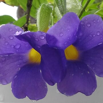 Dew Covered Flowers by Orikall