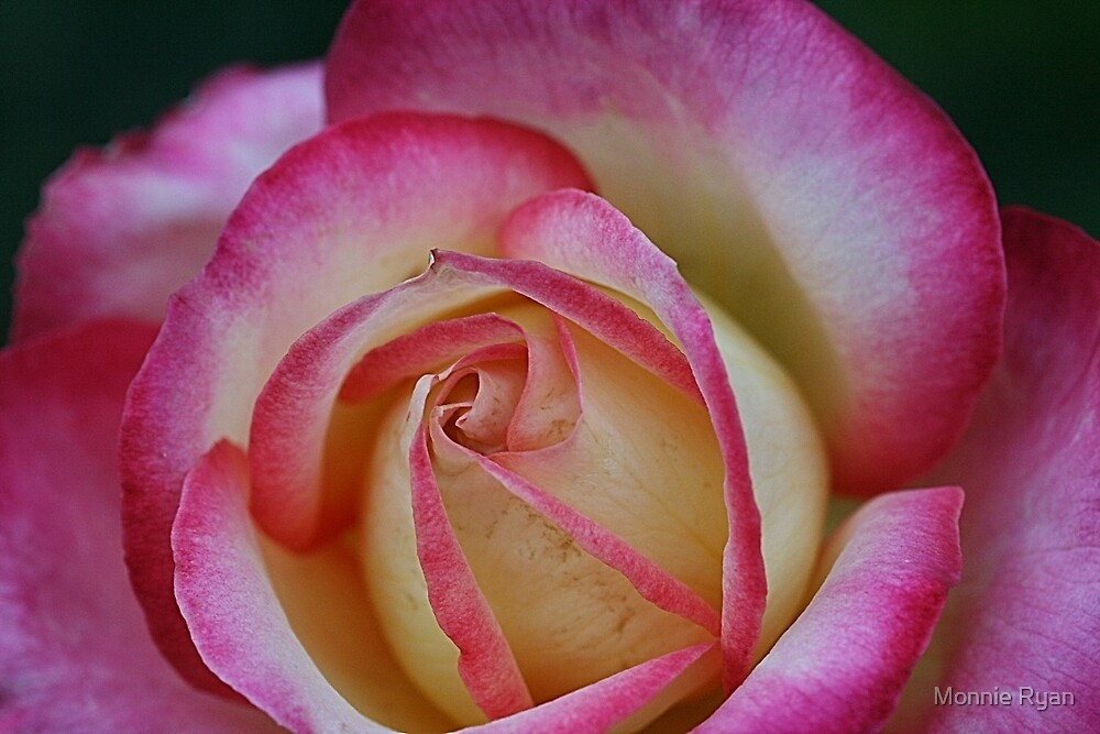 Sweetheart Rose by Monnie Ryan