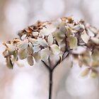 Pale Ardour by Karen E Camilleri