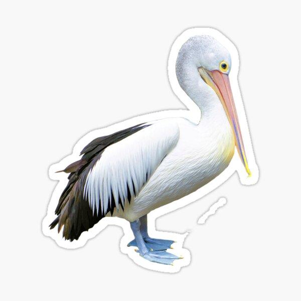 Australian Pelican (Pelecanus conspicillatus) Sticker