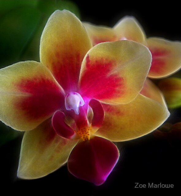 Brilliant Miniature Orchid by Zoe Marlowe
