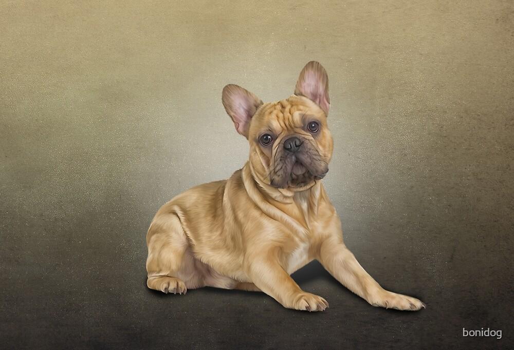 Zeichnung Hund französische Bulldogge von bonidog