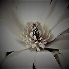 Magnolia Blossom IV by Len Bomba