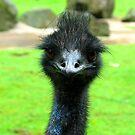 EMU by SofiaYoushi
