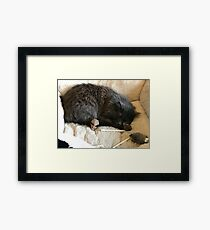 Sleeping Leo Framed Print