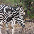 Baby Zebra mit Mutter von LitchiArt