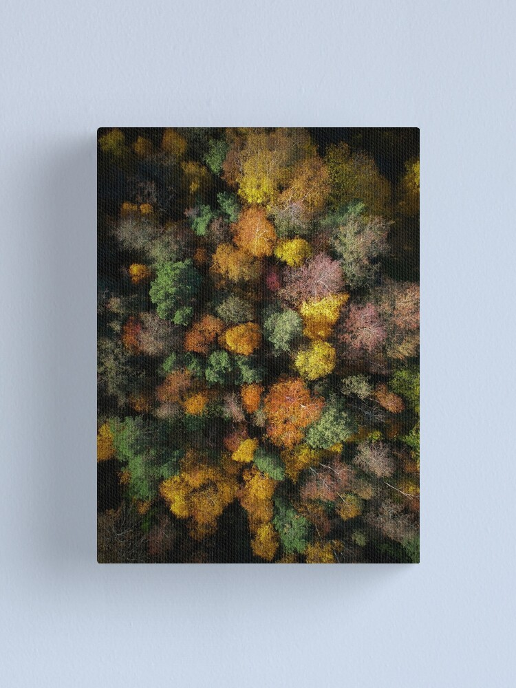 Alternate view of Autumn Forest - Aerial Photography Canvas Print