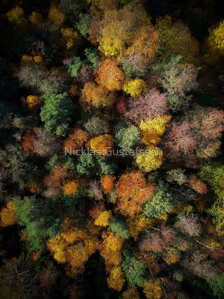 Autumn Forest - Aerial Photography by Nicklas81