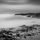 Full Moon Kelp - Friendly Beaches, Tasmania by Liam Byrne