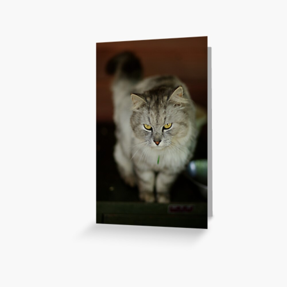 Anything for me? Greeting Card