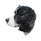 Misko In Profile - The English Springer Spaniel by mcworldent