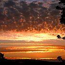 A Golden Morning in Missouri by FrankieCat