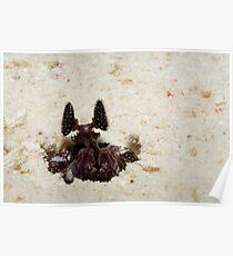 Mantis Shrimp Poster