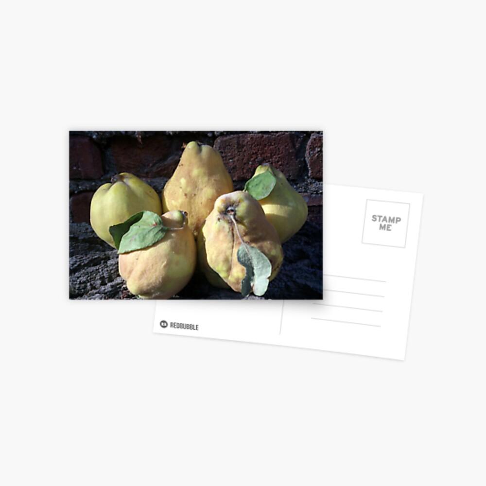 Quitten Postkarte