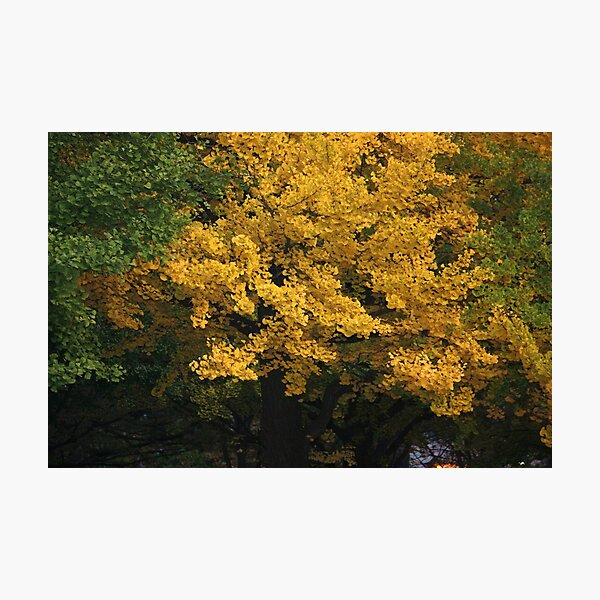 golden tree Photographic Print