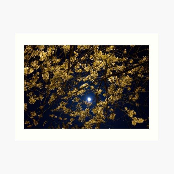 Night blossoms - horizontal Art Print
