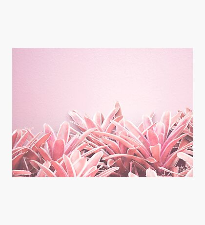 Pink Tropical Nature Photography Photographic Print