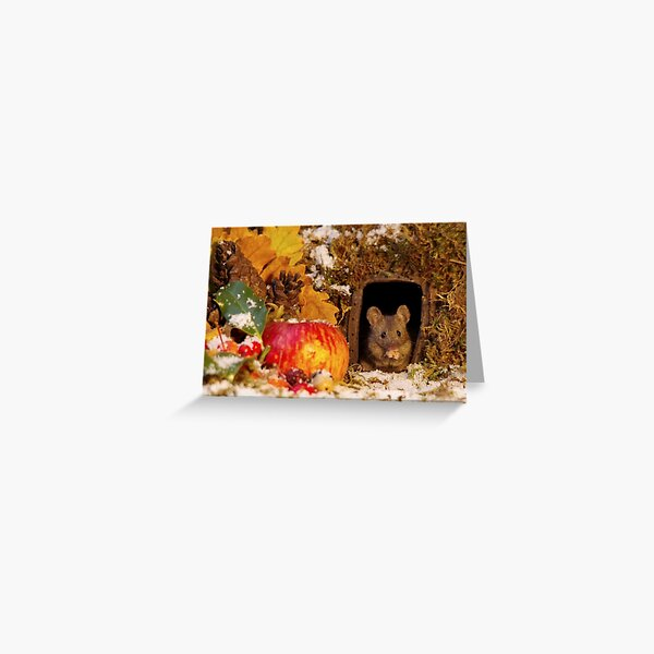 wild mouse feeling the cold  Greeting Card
