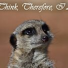 Thoughtful Meerkat Photographic Design by MGMasonCreative