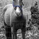 Ready to Ride (Blue Harness) by Linda Costello Hinchey