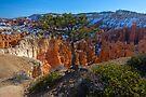Bryce Canyon Close to the Edge by photosbyflood
