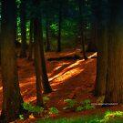 New Yorks Adirondack region XIX  by PJS15204
