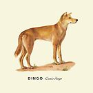 Protect Australian Dingo by RedCloudDesign