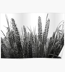 Fall Rain on Grass Poster