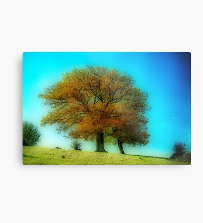 Its a beautiful day ! Metal Print