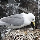 Seagull parenting her chick... by karuna