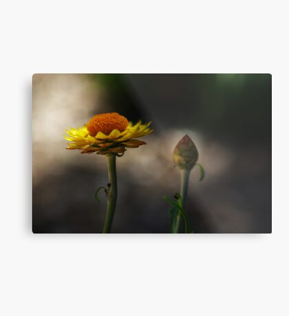 the morning paper daisies Metal Print