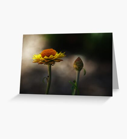 the morning paper daisies Greeting Card