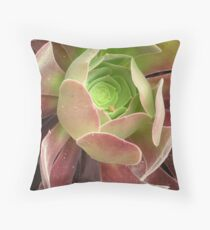 Aeonium arboreum --Extreme Close up Throw Pillow