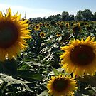 Sunflowers by Something-Cosy