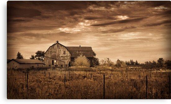Barn and abandoned Vineyard by (Tallow) Dave  Van de Laar