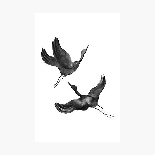 Flying Cranes Photographic Print
