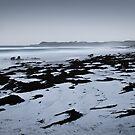 Stranded Kelp - Friendly Beaches, Tasmania by Liam Byrne